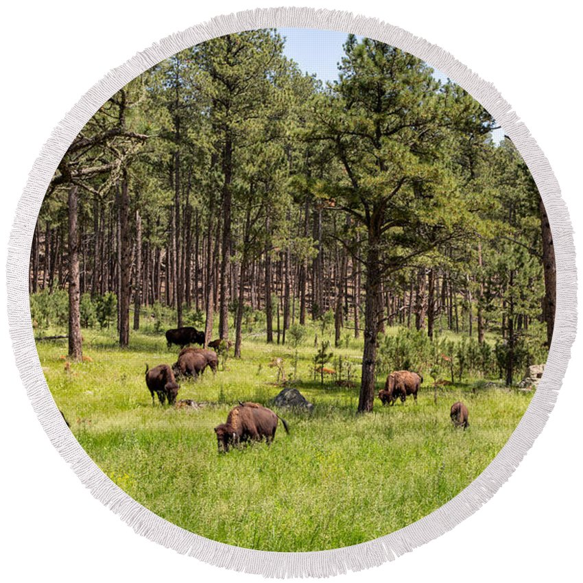 Landscape Round Beach Towel featuring the photograph Lazily Grazing Bison by John M Bailey