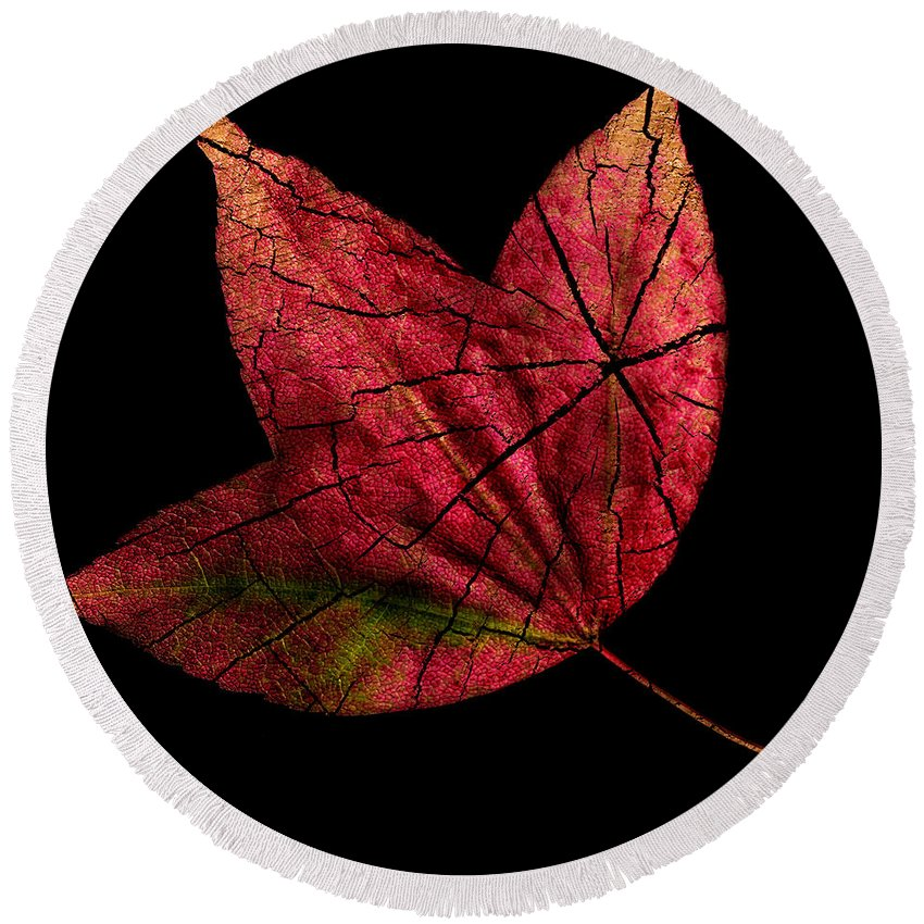 Fall Round Beach Towel featuring the photograph Leaf And Tree by Jon Woodhams