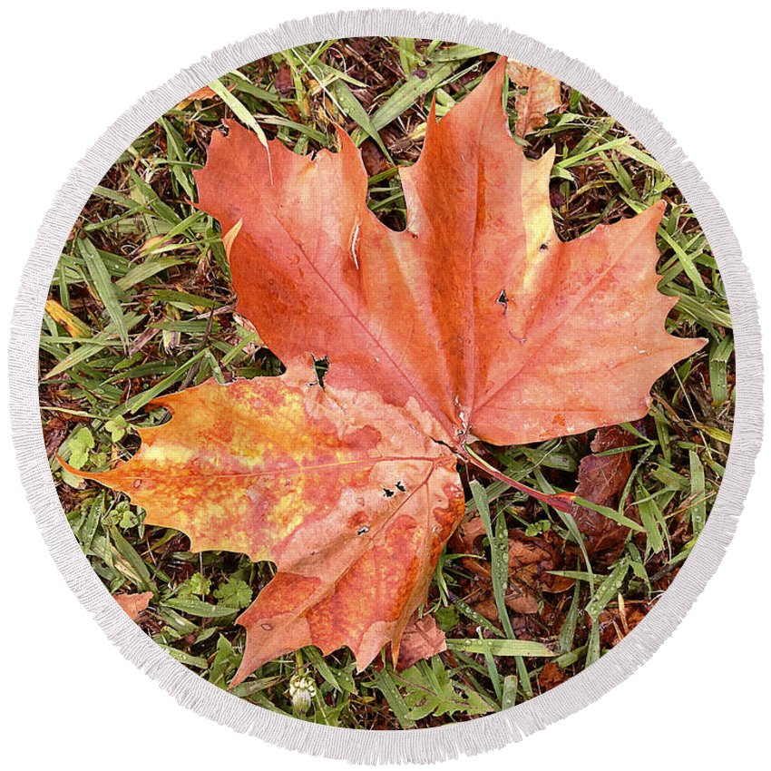 Autumn Round Beach Towel featuring the photograph Leaf by Les Cunliffe