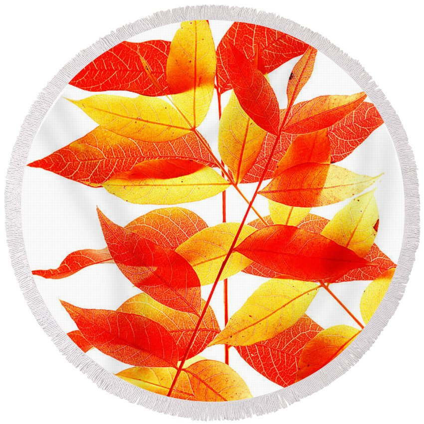 Leaves Round Beach Towel featuring the photograph Leaves In Fall by Robert Woodward