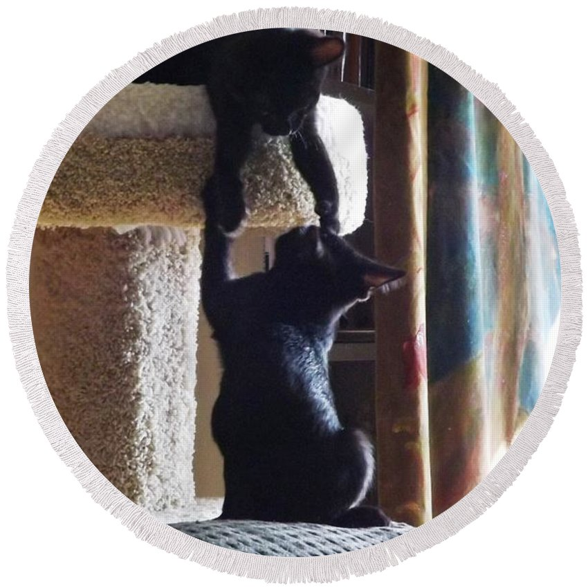 Kitten Round Beach Towel featuring the photograph Let Me Help You Up by Jussta Jussta