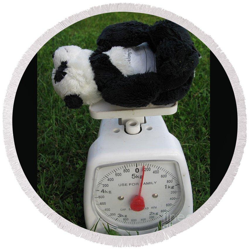 Baby Panda Round Beach Towel featuring the photograph Let's Check My Weight Now by Ausra Huntington nee Paulauskaite