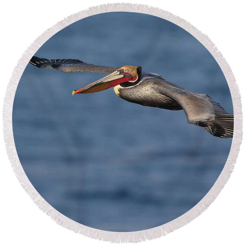 Brown Pelican Round Beach Towel featuring the photograph Let's Fly by Bryan Keil