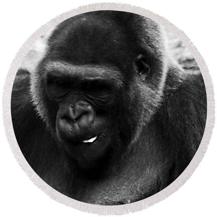 Chimpanzee Round Beach Towel featuring the photograph Light Snack by Ken Frischkorn