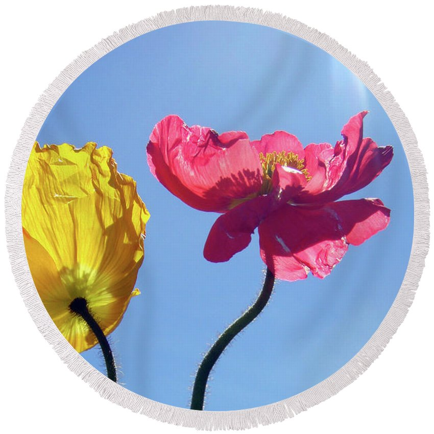 Poppy Round Beach Towel featuring the photograph Light Stream by Donna Blackhall