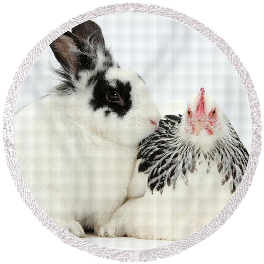 Nature Round Beach Towel featuring the photograph Light Sussex Bantam Hen And Rabbit by Mark Taylor