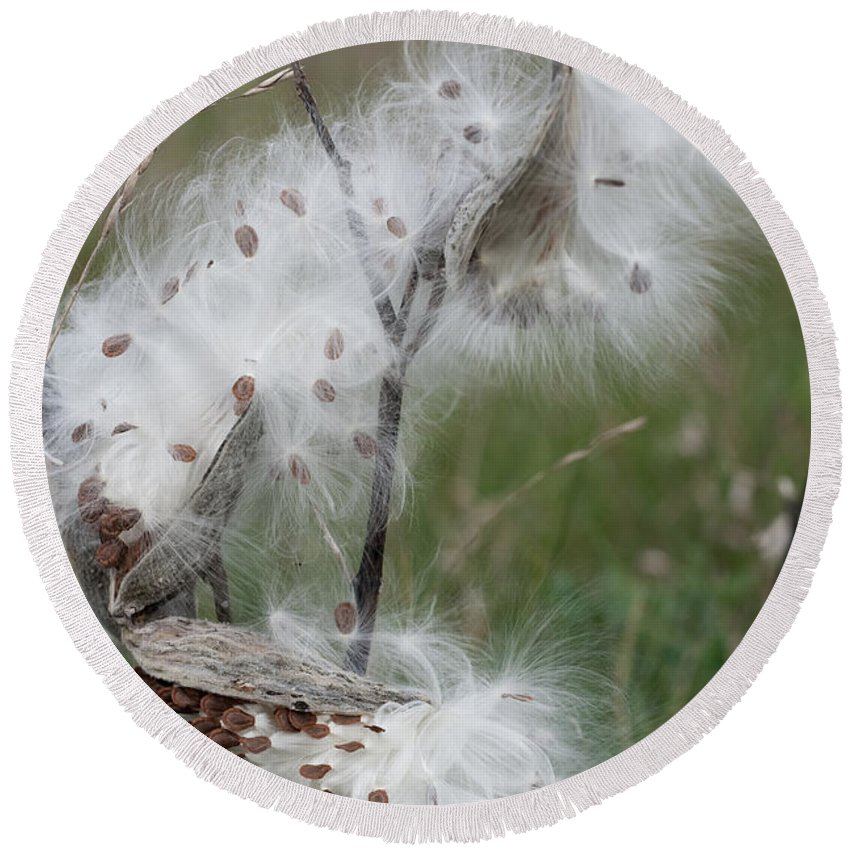 Milkweed Round Beach Towel featuring the photograph Lighter Than Air by Barbara McMahon