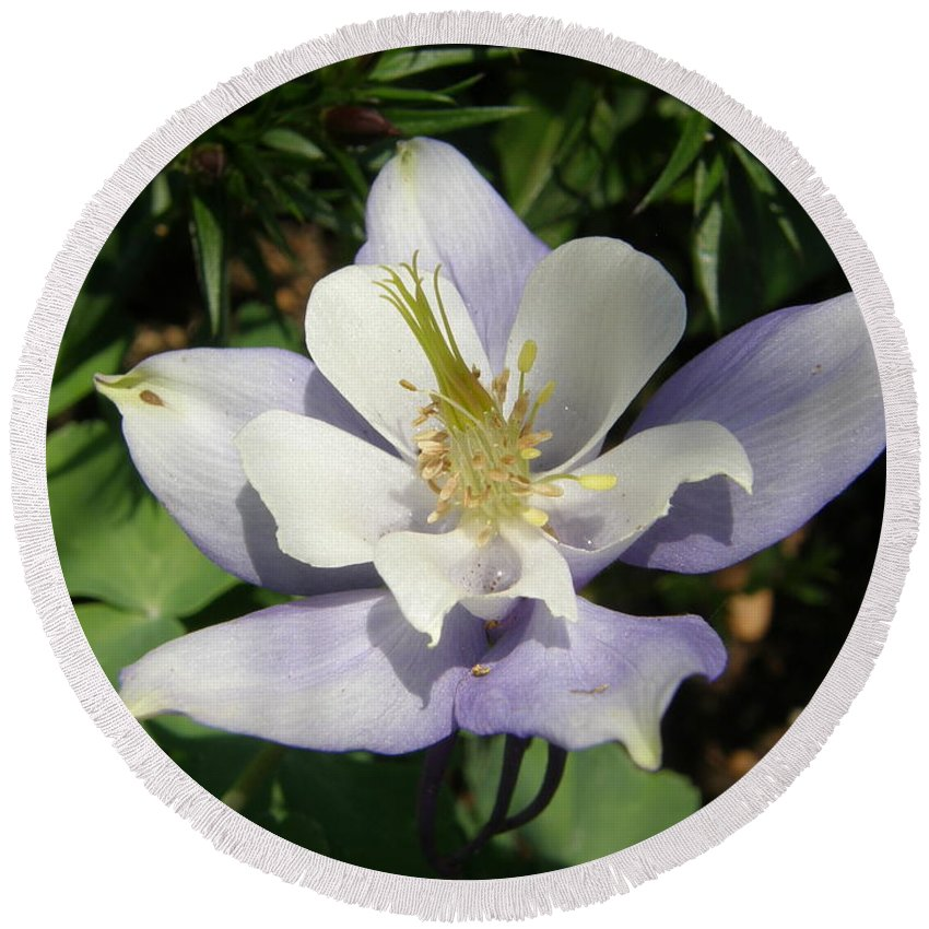 Columbine Round Beach Towel featuring the photograph Lilac Columbine by Caryl J Bohn