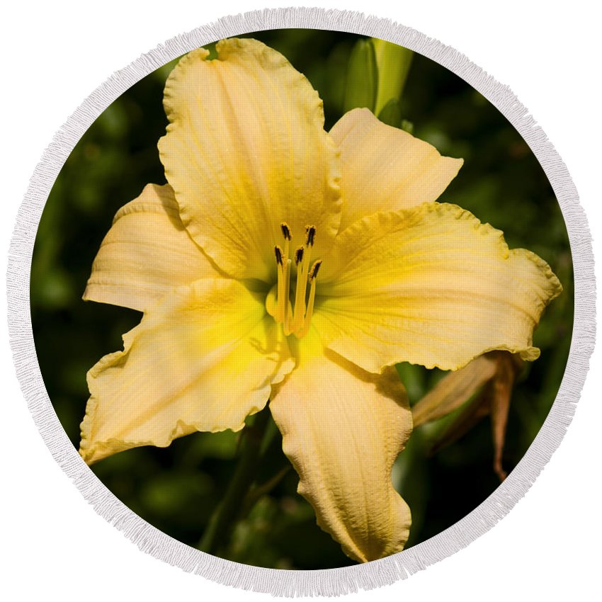 Daylily Round Beach Towel featuring the photograph Lily For A Day by Joe Geraci