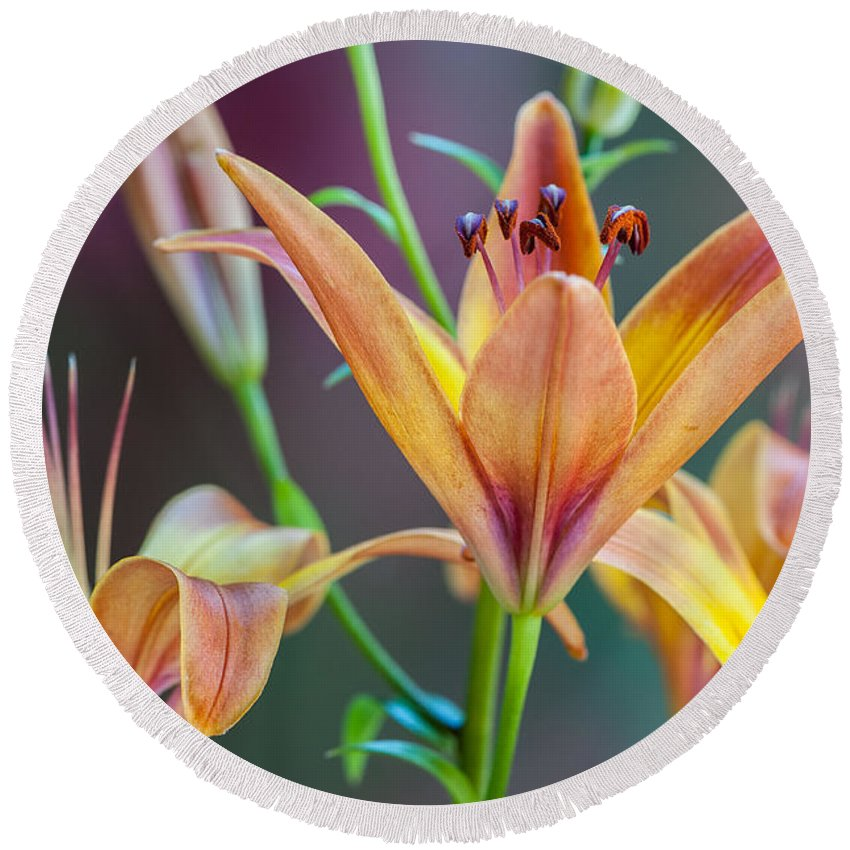 Lily Round Beach Towel featuring the photograph Lily From The Garden by Randy Walton