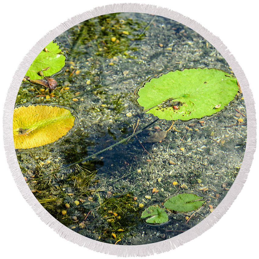 Lily Round Beach Towel featuring the photograph Lily Leafs On The Water by Viktor Birkus