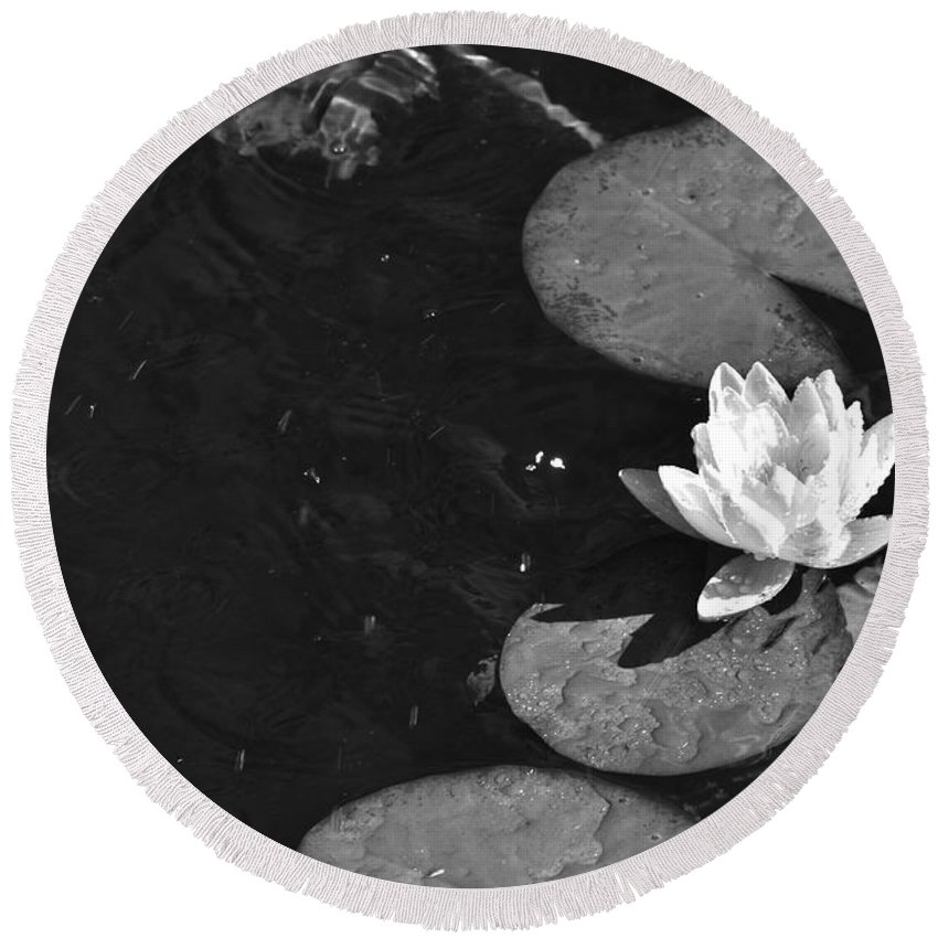 Black Round Beach Towel featuring the photograph Lily Pad In Bloom by Juanita Doll