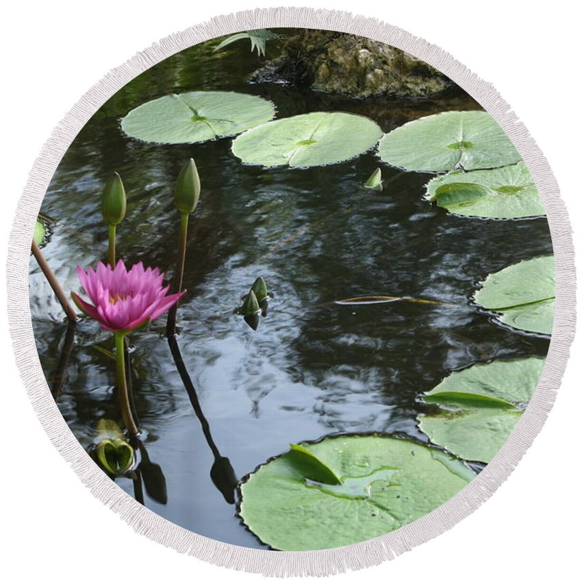 Waterlily Round Beach Towel featuring the photograph Lily Pond by Irina Davis