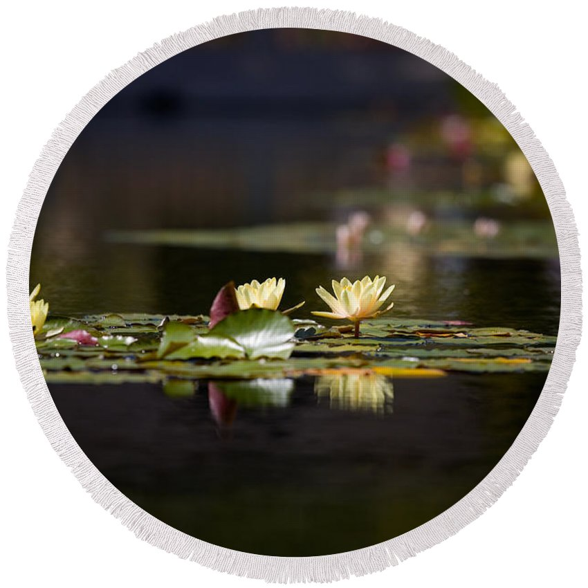 Waterlily Round Beach Towel featuring the photograph Lily Pond by Peter Tellone