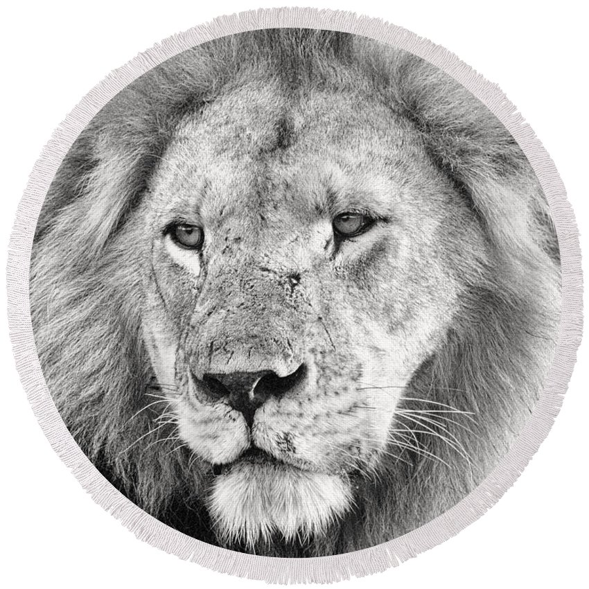 3scape Round Beach Towel featuring the photograph Lion King by Adam Romanowicz