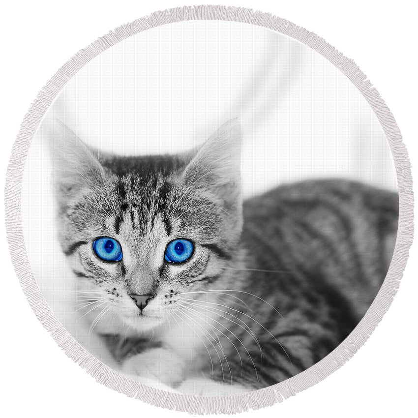 Adorable Round Beach Towel featuring the photograph Little Cute Kitten. Space For Your Text by Michal Bednarek