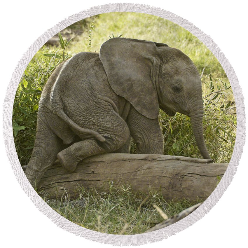 Africa Round Beach Towel featuring the photograph Little Elephant Big Log by Michele Burgess