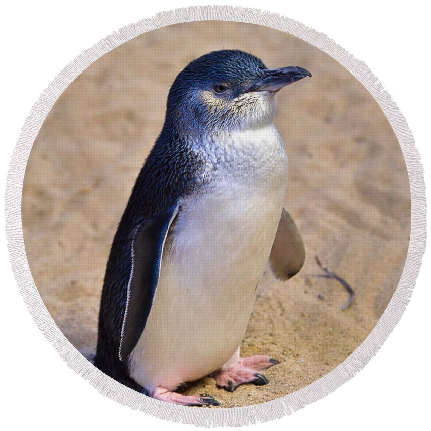 Nature Round Beach Towel featuring the photograph Little Penguin by Louise Heusinkveld