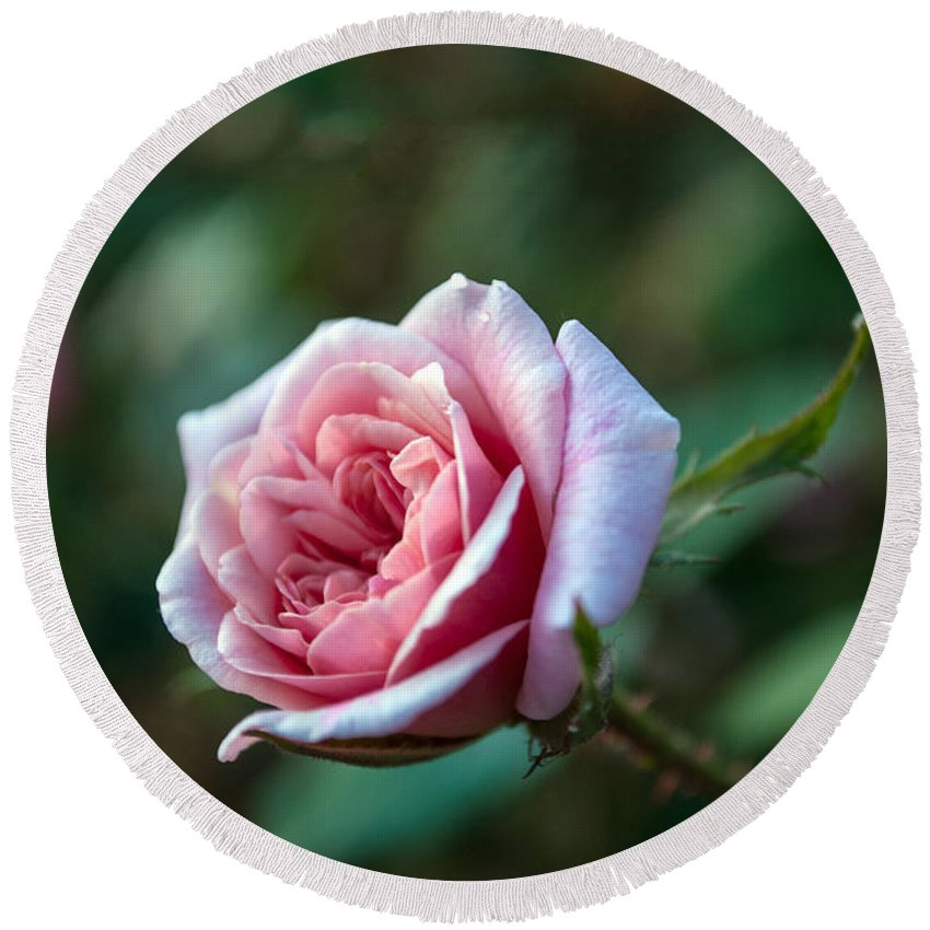 Layers Round Beach Towel featuring the photograph Little Pink Rose by Anna Burdette
