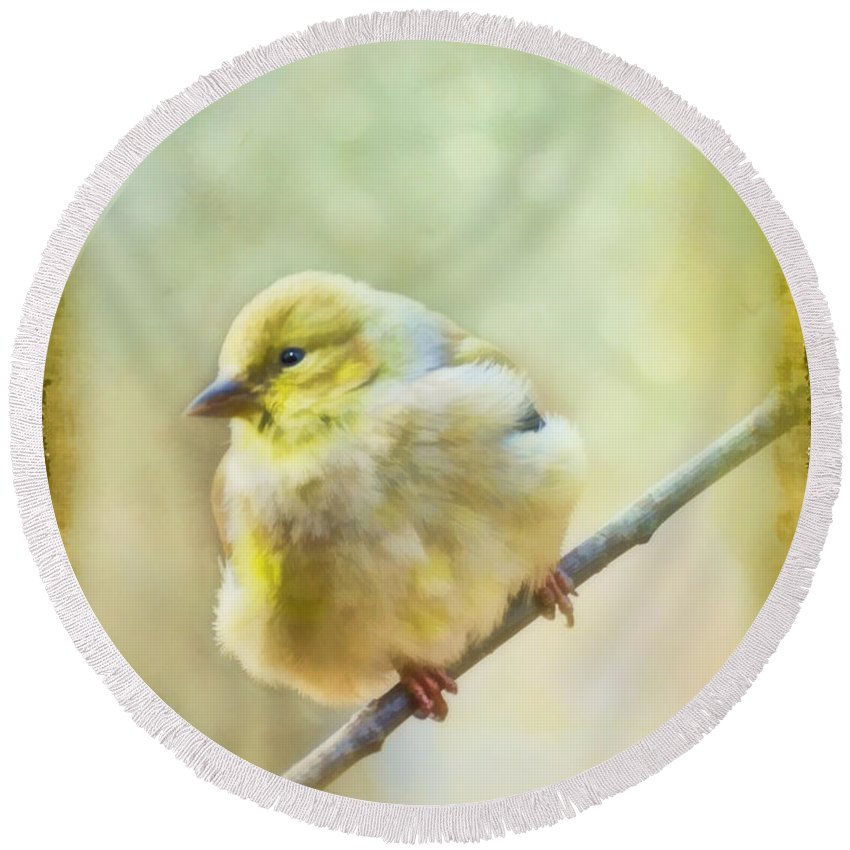 Wild Round Beach Towel featuring the photograph Little Softie Gold Finch - Digital Paint by Debbie Portwood