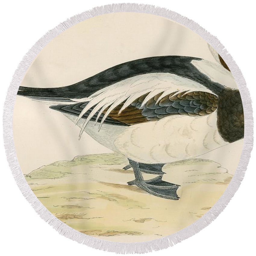 Birds Round Beach Towel featuring the photograph Long Tailed Duck by Beverley R. Morris