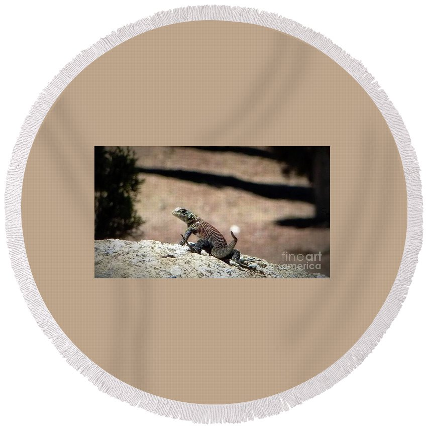 Lizard Round Beach Towel featuring the photograph Looking Back by Susan Garren