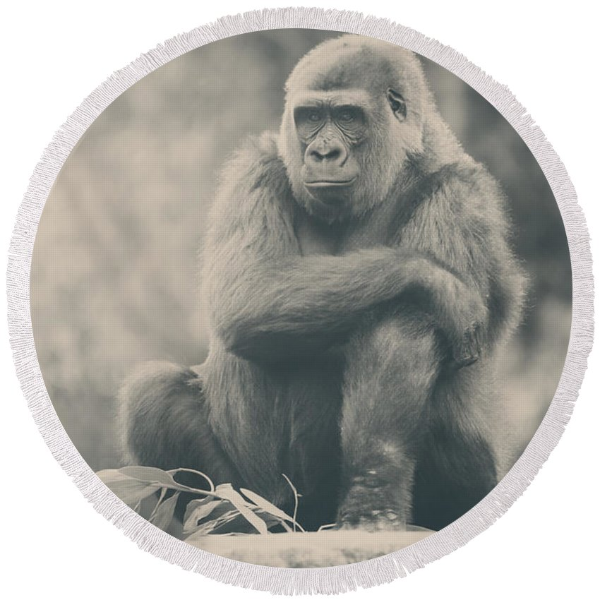 Gorillas Round Beach Towel featuring the photograph Looking So Sad by Laurie Search