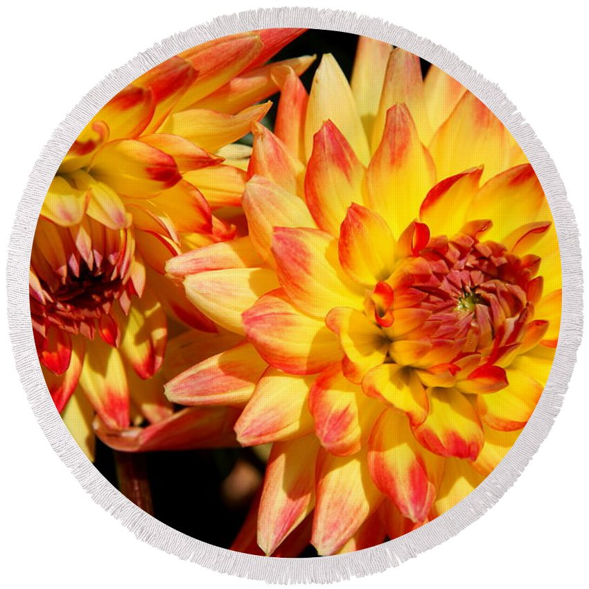 Dahlia Round Beach Towel featuring the photograph Looking Up Looking Down by Christiane Schulze Art And Photography