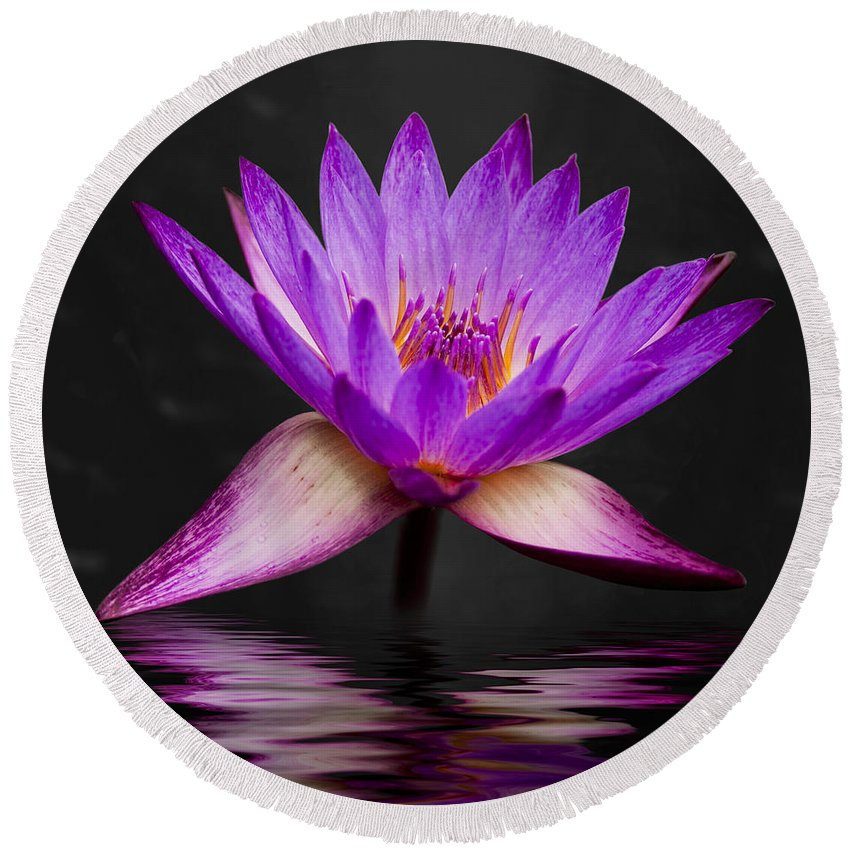 3scape Round Beach Towel featuring the photograph Lotus by Adam Romanowicz