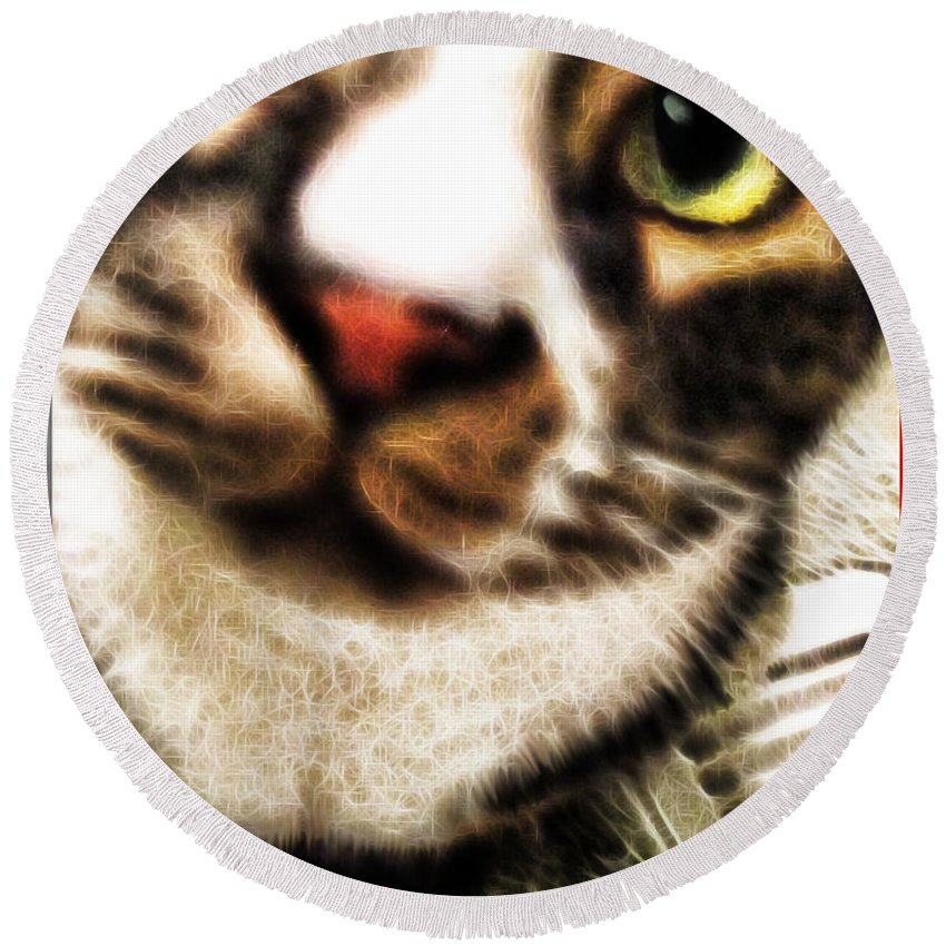 Cat Round Beach Towel featuring the photograph Louis Iv Up Close by Joan Minchak