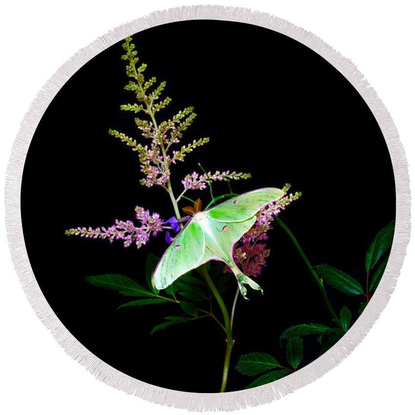 Luna Moth Astilby Flower: Round Beach Towel featuring the photograph Luna Moth Astilby Flower by Randall Branham