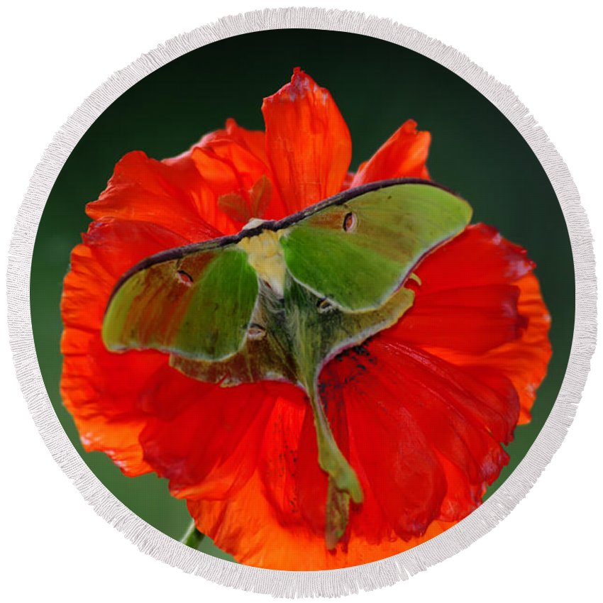 : Round Beach Towel featuring the photograph Luna Moth Orange Poppy Green Bg by Randall Branham