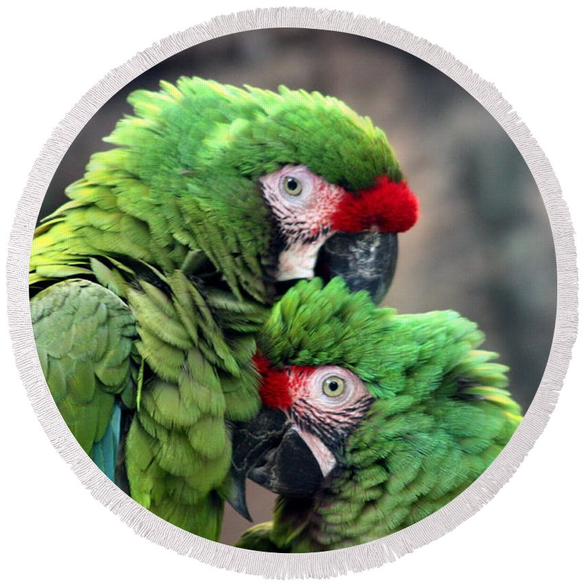 Macaw Round Beach Towel featuring the photograph Macaws In Love by Diane Merkle