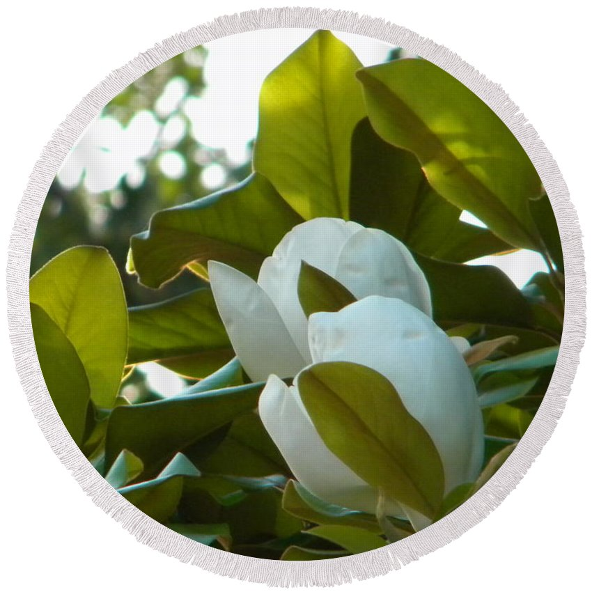 Magnolia Round Beach Towel featuring the photograph Magnolia Pair by Nathanael Smith