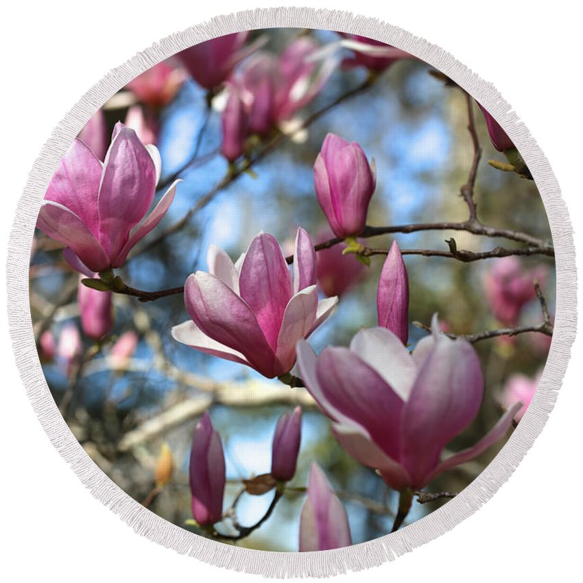 Saucer Magnolia Round Beach Towel featuring the photograph Magnolia Perspective by Carol Groenen