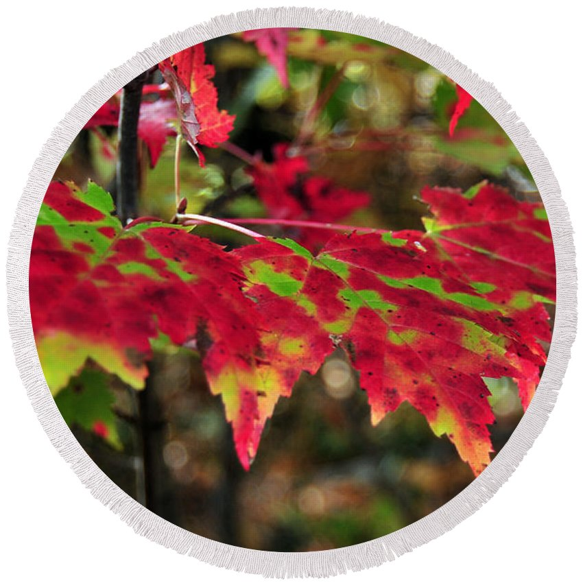 Fall Foliage Round Beach Towel featuring the photograph maine 37 Maple Leaf Fall Foliage by Terri Winkler