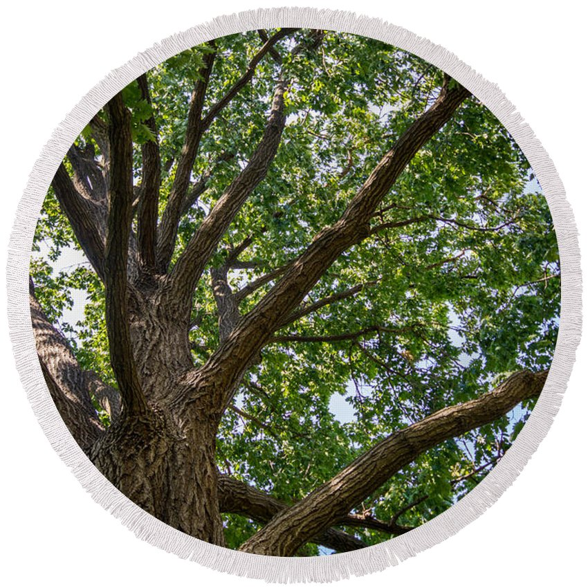 Tree Round Beach Towel featuring the photograph Majestic Oak by Gaurav Singh