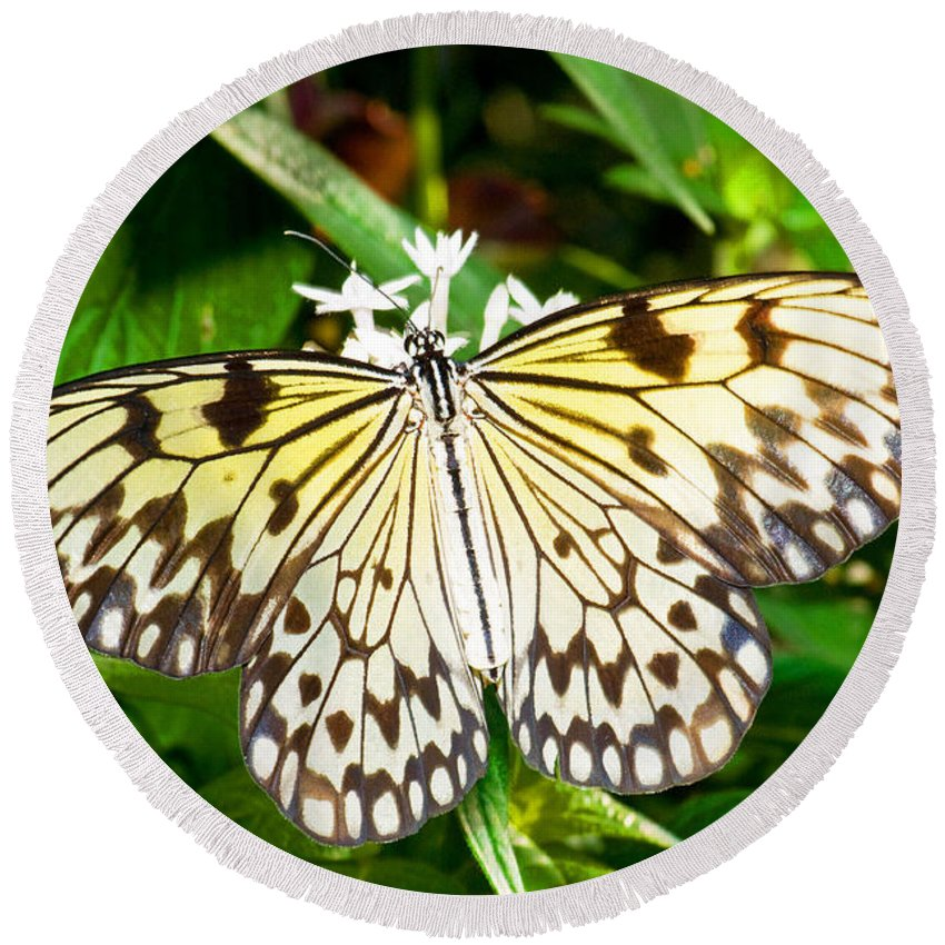 Nature Round Beach Towel featuring the photograph Malabar Tree Nymph Butterfly by Millard H. Sharp