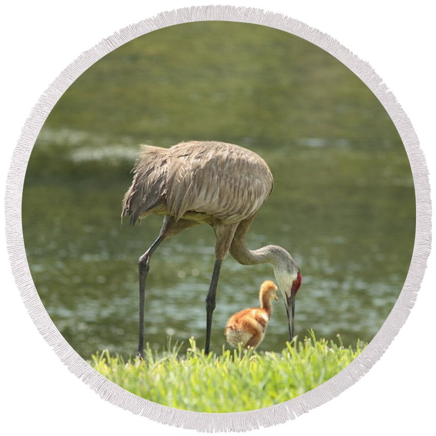 Sandhill Crane Round Beach Towel featuring the photograph Mama And Chick by Carol Groenen