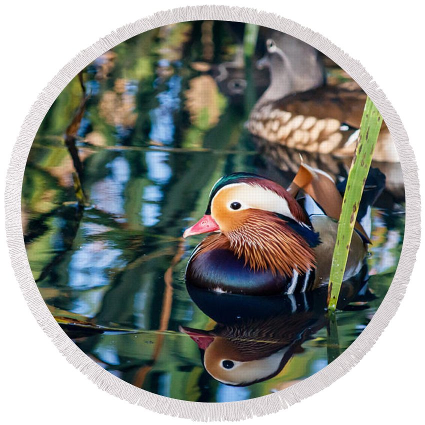 Swimming Duck Round Beach Towel featuring the photograph Mandarin Duck Reflections by Silken Photography