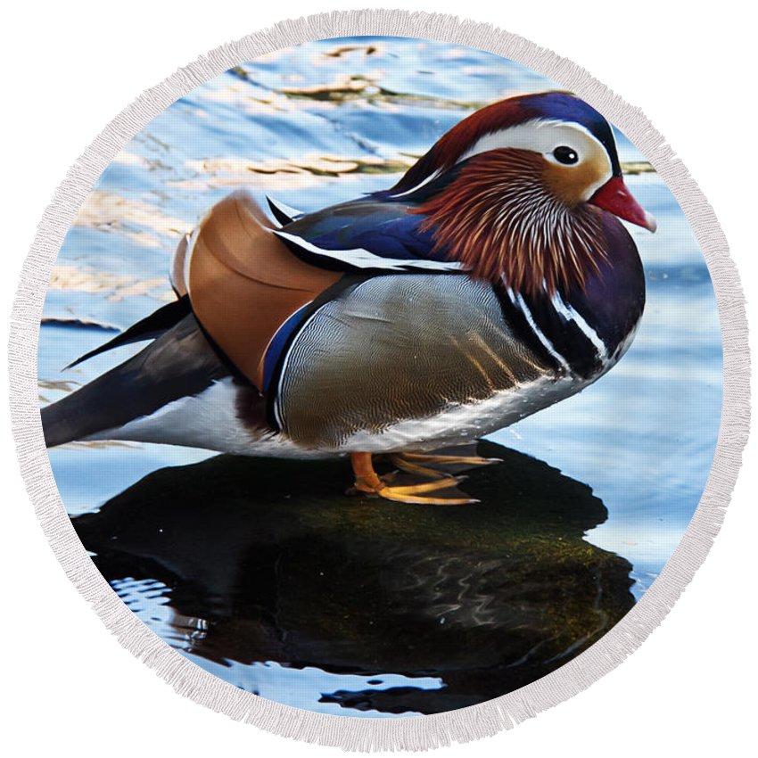 Birds Round Beach Towel featuring the photograph Mandarin Duck by Robert Bales