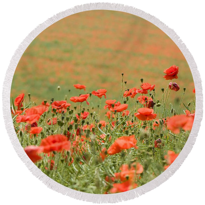 Annual Round Beach Towel featuring the photograph Many Poppies by Anne Gilbert