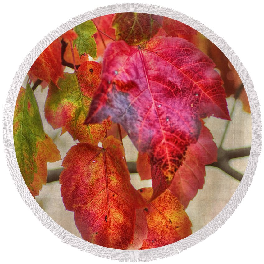 Maple Leaf Round Beach Towel featuring the photograph Maple Colors by Susan Capuano