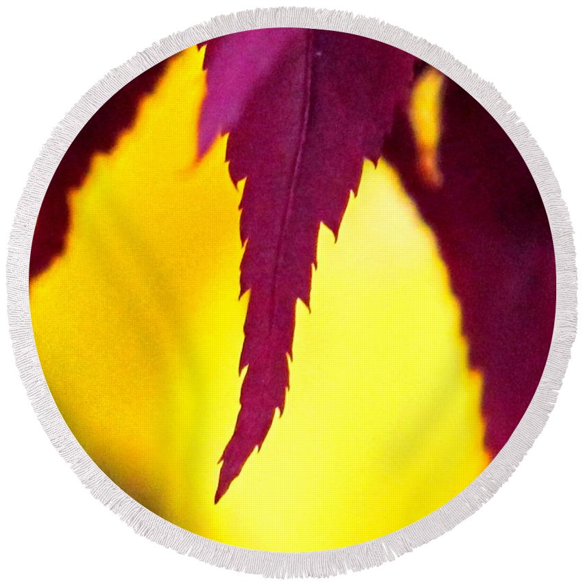 Maroon Round Beach Towel featuring the photograph Maroon And Yellow by Ian MacDonald