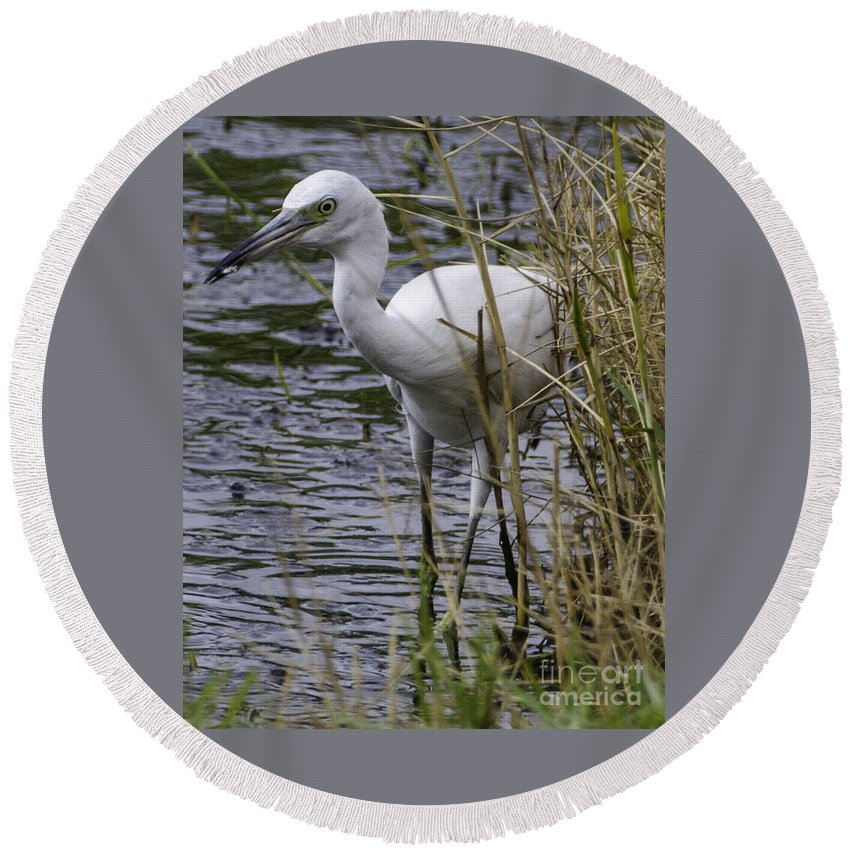 Great White Heron Round Beach Towel featuring the photograph Marsh Fishing by Dale Powell