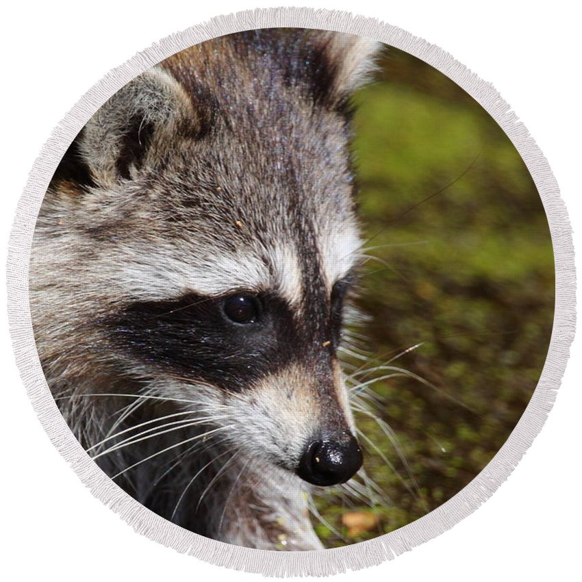 Raccoon Round Beach Towel featuring the photograph Masked Bandit by Bruce J Robinson