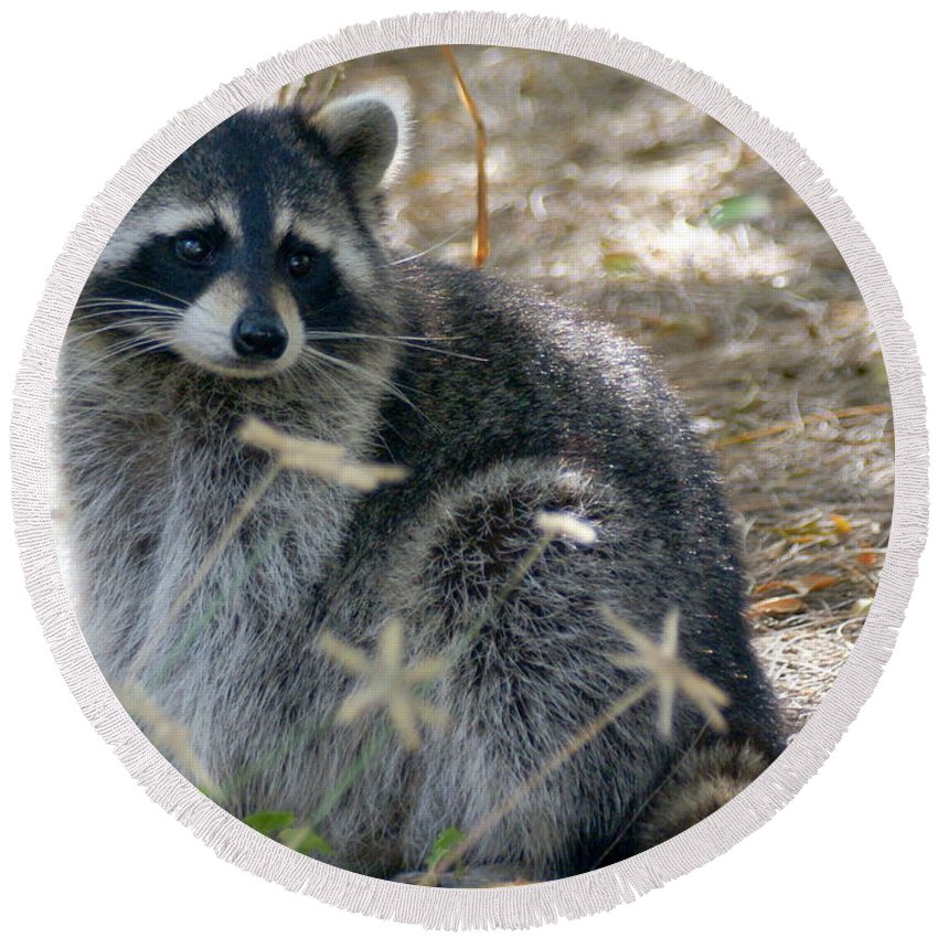 Raccoon Round Beach Towel featuring the photograph Masked Bandit by Larry Allan