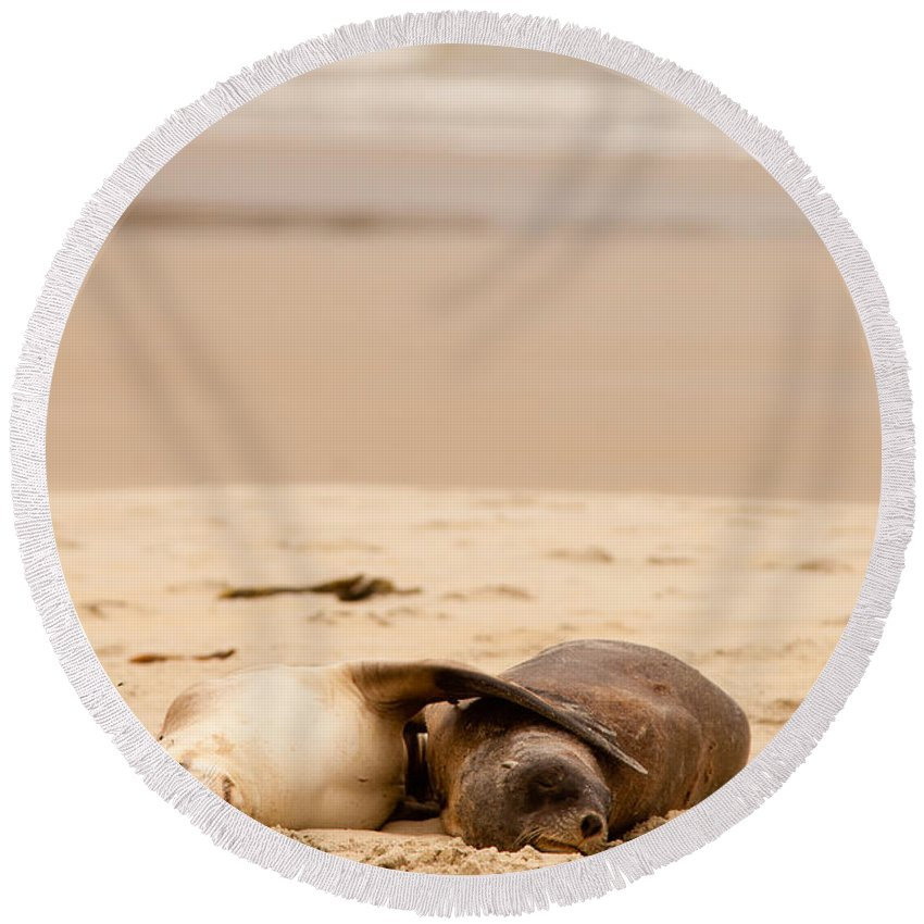South Island Round Beach Towel featuring the photograph Mating Hookers Sealions Taking A Nap On Beach by Stephan Pietzko