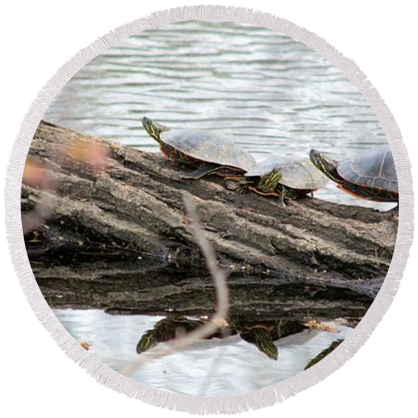 Turtle Round Beach Towel featuring the photograph Meeting On The Log by Bonfire Photography