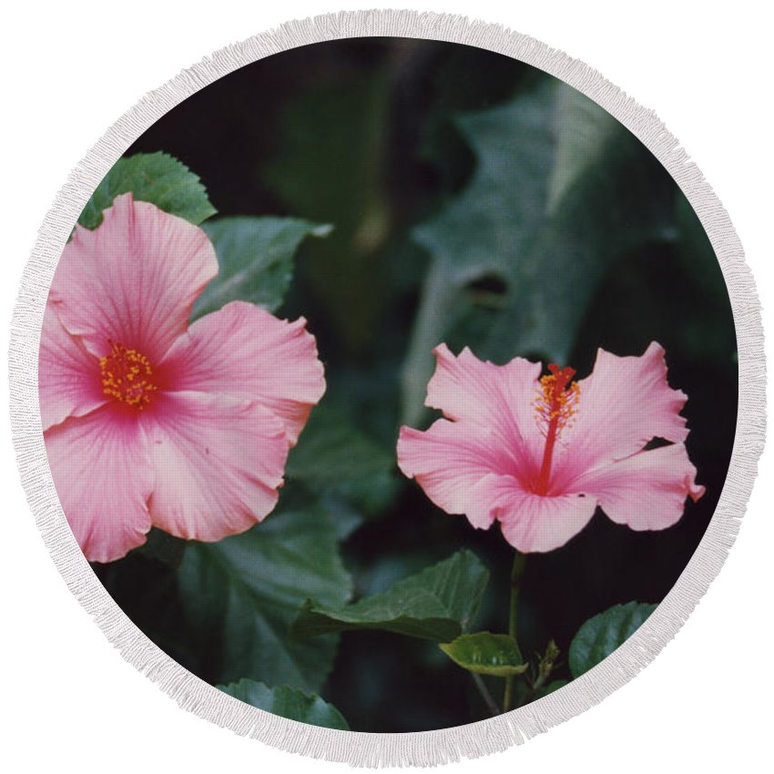 Mexico Round Beach Towel featuring the photograph Mexico Pink Beauties By Tom Ray by First Star Art